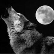 zuiverend zilver en huilen naar de maan